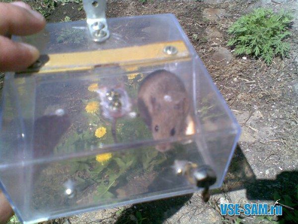 Гуманная мышеловка из коробочки для дискет