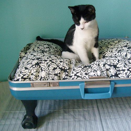 Кровать для кошки из чемодана